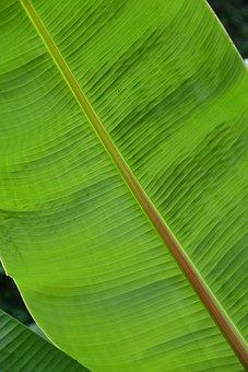 Leaf, Structure, Plant, Green, Palm, Palm Leaf