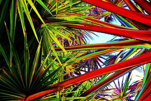 Leaves, Tropical, Art, Foliage, Nature, Leaf, Green
