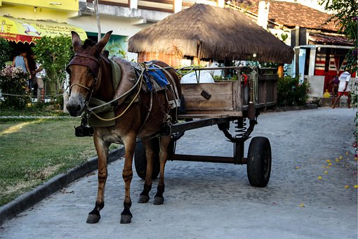 Wagon, Boipeba, John Santos, Wagon Wheel, Rural