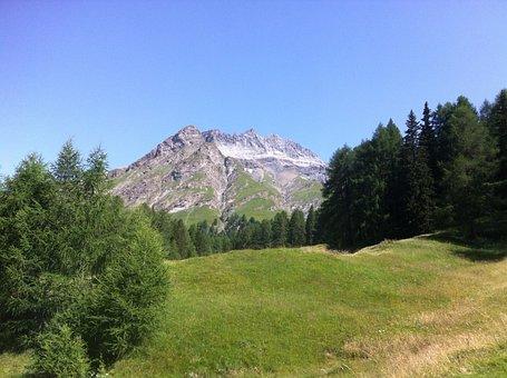 Engadin, Root Tip, Alpine