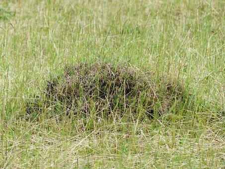 Ant Hill, Anthill, Meadow, Glade, Meadow Ants, Ants