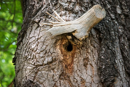 Knothole, Nest, Nesting Place, Hole, Tree, Bark, Branch