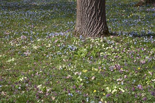 Spring Meadow, Tree, Park, Nature, Primrose, Cowslip