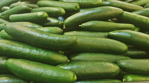 Cucumber, Vegetables, Green, Gourd, Food, Grocery