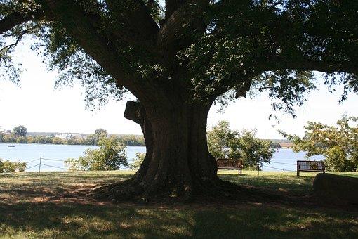 Old Tree, Shirley Plantation, Jams River, Nature