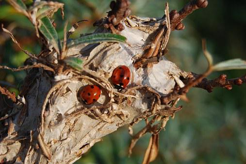 Ladybug, Pair, Nature, Wood, Love, Green, Couple