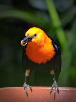Bird, Eat, Food, Made, Worm, Small Bird, Animal