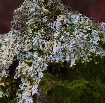 Lichen Moss, Nature, Growth, Plant, Texture, White