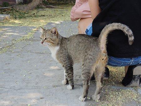 Turkey, Izmir, Cat, Tigercat, Alley Cat, Cat Face
