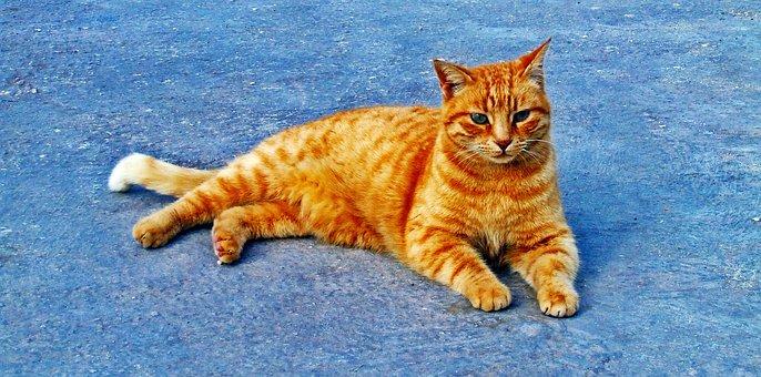 Cat, Ginger, Cute, Feline, Resting, Pet, Animal, Fluffy
