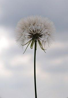 Dandelion, Seeds, Nature, Weed, Blow, Detail, Fluffy