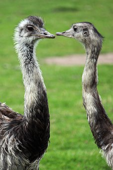 Animal, Background, Beak, Bird, Eye, Feather, Feathers
