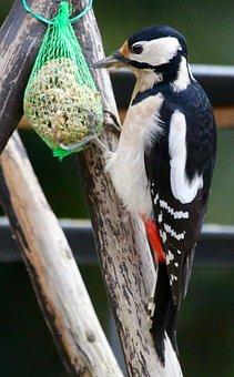 Woodpecker, Great Spotted Woodpecker, Bird, Bird Seed