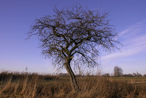 Tree, Leafless, Autumn, Meadows, Branches, Dry