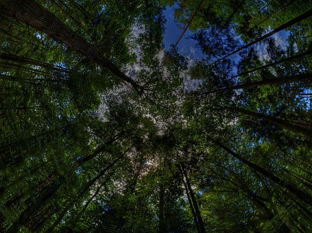 Treetop, Magic Forest, Forest, Trees, Nature