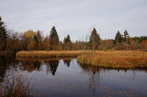 Lake, Moor, Forest, Palsen Tree, Spruce, Fir