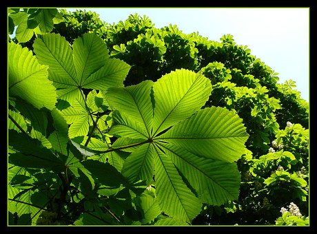 Leaves, Green, Shadow Play, Leaf, Light, Nature