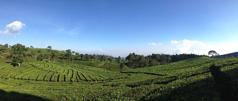 Tea Valley, Bandung, Indonesia