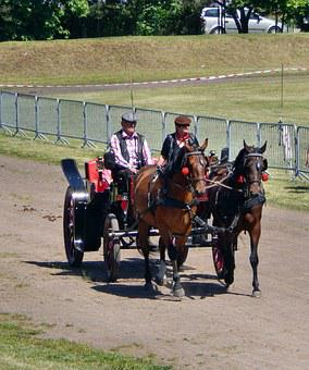 Horse-drawn Carriage, The Horse, Galop, Horses, Hooves