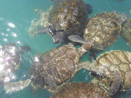 Turtle, Water, Nature, Sea, Ocean, Animal, Wildlife