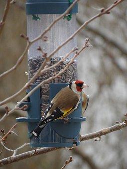 Bird, Stieglitz, Winter, Wing, Feather, Bill, Animal