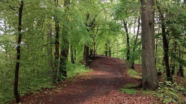 Arnsberg, Eichholz, Forest, North Rhine Westphalia