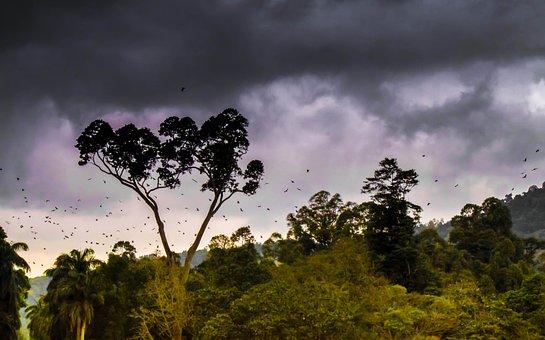 Jungle, Forest, Nature, Tropical, Landscape, Green