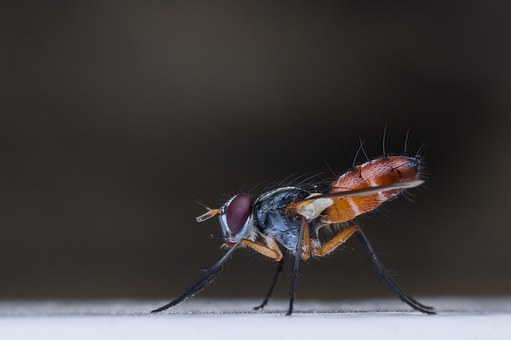 Macro, Insect, Fly, Animal, Bug, Nature, Garden