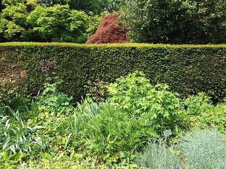 Plant, Botany, Garden, Botanical Garden