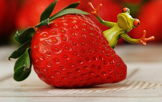 Strawberries, Frog, Funny, Fruit, Close, Fruits, Red