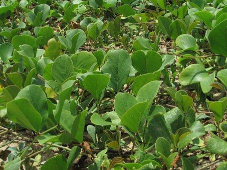 Water Plants, Leaves, Green, Sea Shore