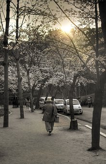 Sunset, Monk, Religion, Human, Desaturated, Blossoms