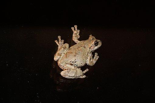 Tree Frog, Nature, Frog, Tree, Wildlife, Amphibian