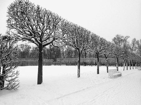 Winter, Trees, Catherine Palace, Snow, Landscape, White