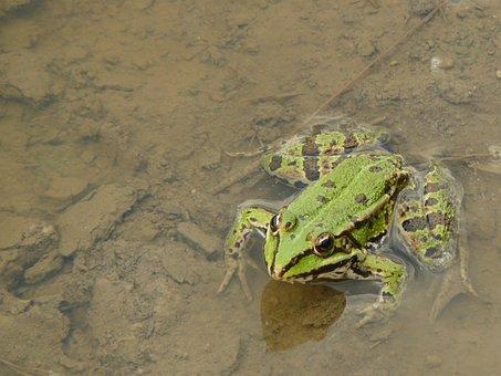 Frog, Watch, Expectations, Ambush