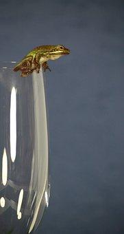 Tree Frog, Frog, Animal, Toad, Amphibian, Nature