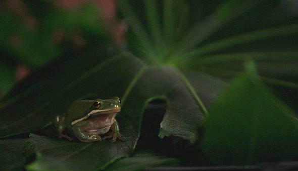 Frog, Animal, Pet, Toad, Water, Amphibian, Nature