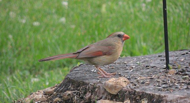 Bird On A Stump, Finch, Bird, Wildlife, Nature, Animal
