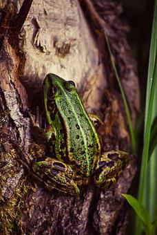 Frog, Tree, Green, Nature, Animal, Wildlife, Tropical