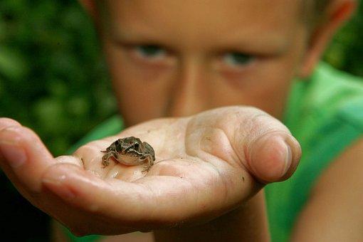 Frog, Boy, Child, Hand, Wildlife, Nature, Amphibian