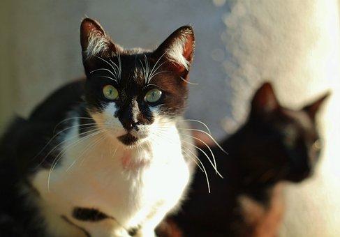 Cat, Animal, Cat Face, Head, Animal World, Mallorca