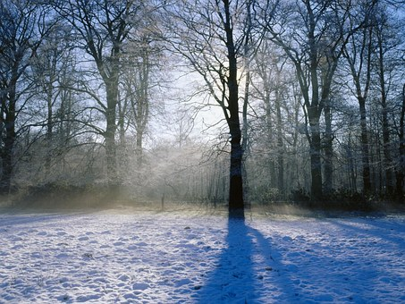 Snow, Tree, Winter, Christmas, Like Ice