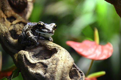 Frog, Terrarium, Brown, Exotic, Close Up, Rainforest