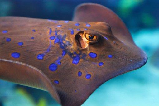 Animal, Aqua, Aquarium, Colorful, Diving, Fish, Marine