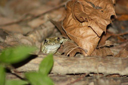 Frog, Hiding, Tiny, Amphibian