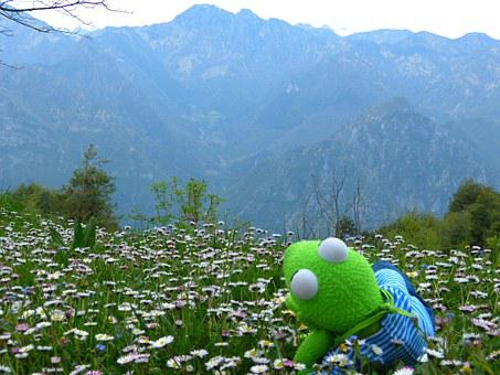Kermit, Frog, Outlook, Mountains, Enjoy, Meadow, Daisy