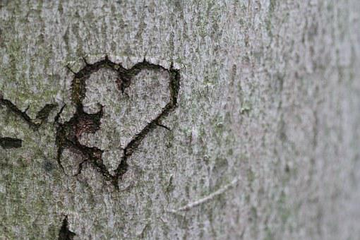 Heart, Declaration Of Love, Love, Tree, Romance, Carved