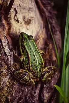 Frog, Tree, Green, Nature, Animal, Wildlife, Tropical