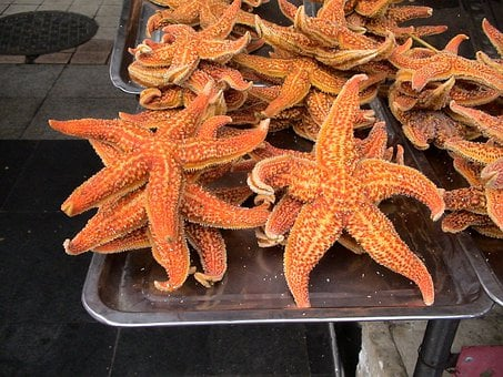 Common Starfish, Asterias Rubens, Pliers Star