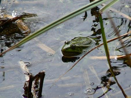Lutry, Lake, The Frog